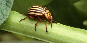 Tipos de escarabajos