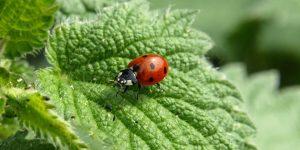 Escarabajos, beneficios y daños que dan a la naturaleza